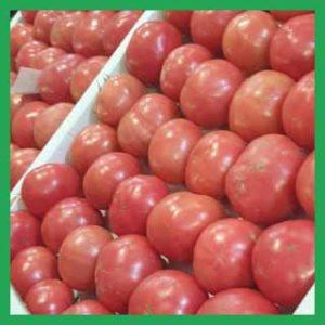 томат оптом в Дагестан