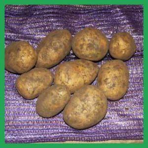 Картофель оптом краснодар